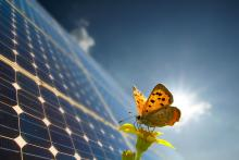 butterfly on solar panels